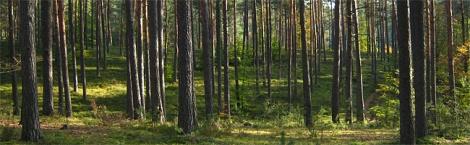 Rezerwaty przyrodnicze Roztocza Południowego