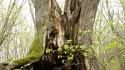 drzewo-rozwalone
