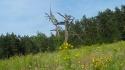 strzepy-drzewa